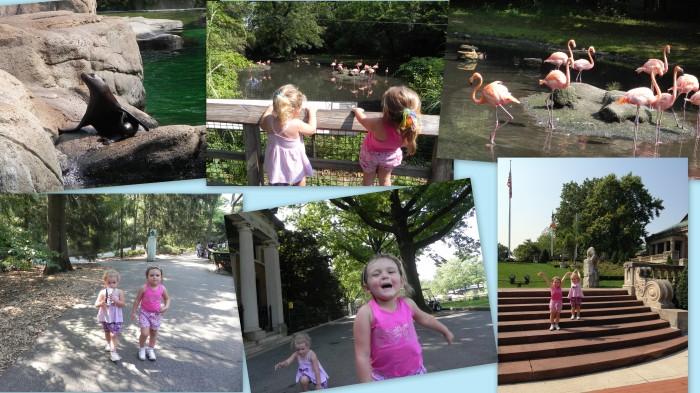 Leões marinhos, flamingos e bagunça!